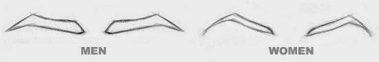 eyebrows of men and women