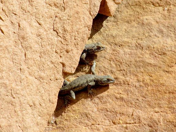 Lizards sunning themselves