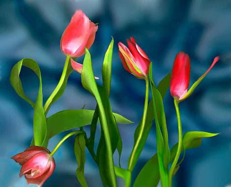 """The """"New Tulips"""" piece from the """"2002"""" collection"""
