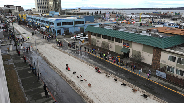 In this photo taken on Sunday, 28 February 2016, Fur Rondy mushers drive their dog teams down a ribbon of snow that was placed on 4th Avenue in a snowless downtown Anchorage for the annual winter festival event. In the 2015-2016 season, Alaska had the second-warmest December through February of the last century, and many parts of the state, including Anchorage, are seeing their warmest winters ever. Photo: Bill Roth / Alaska Dispatch News