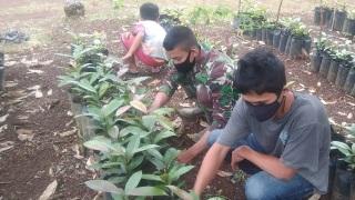 Dukung Koservasi Alam,  Rawat  Bibit Pohon Manggis