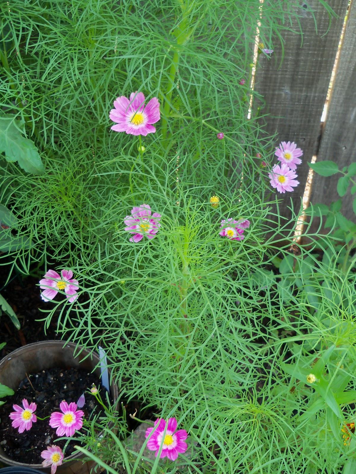 Gardening 2010, Part Two - 101_3353.JPG