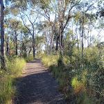 Walking track to Bulgandry site (216857)