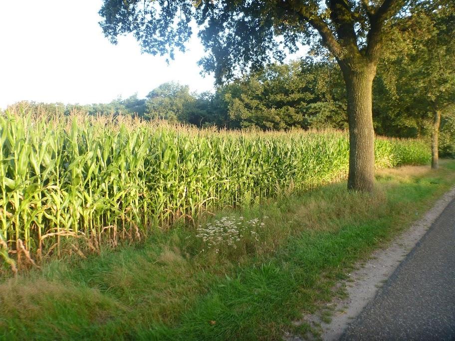 Marche Kennedy (80km) de Melderslo (NL): 17-18 août 2013 P1030903