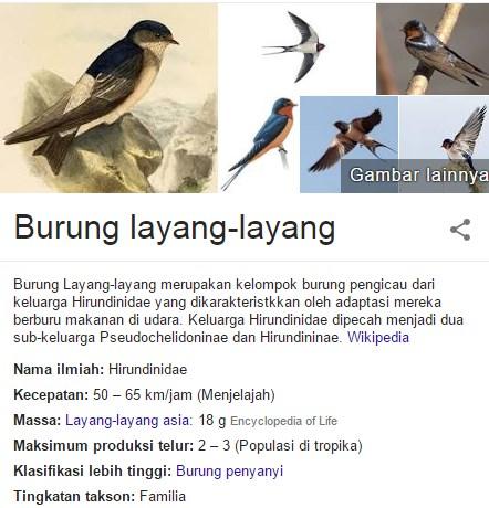 layang termasuk keluarga Hirundininae yang juga termasuk martins Fakta menarik ihwal burung layang-Layang