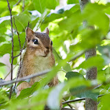 chippy_MG_8126-copy.jpg