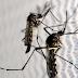 """Acordo prevê """"fábrica de mosquitos"""" para combater dengue em Brumadinho"""