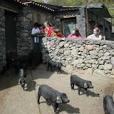 Visitia Finca Los Helechos
