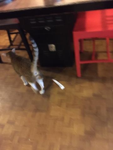吉林路 焼肉焼の猫