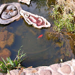 DSCN0085 FIsh Pond.jpg