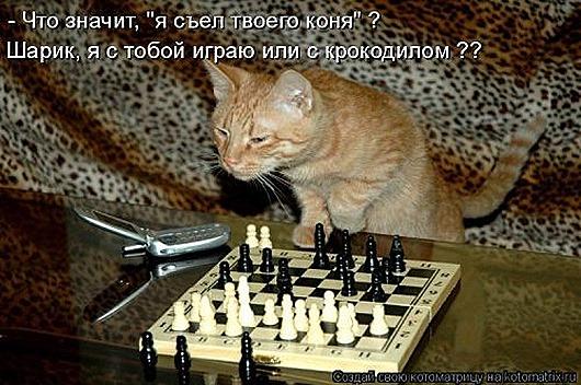 1480083116_svezhaya-kotomatrica-7