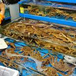 noryangjin fisheries wholesale market in Seoul, Korea in Seoul, Seoul Special City, South Korea