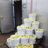 Some of the stored apples being kept for cider pressing and apple grappa.