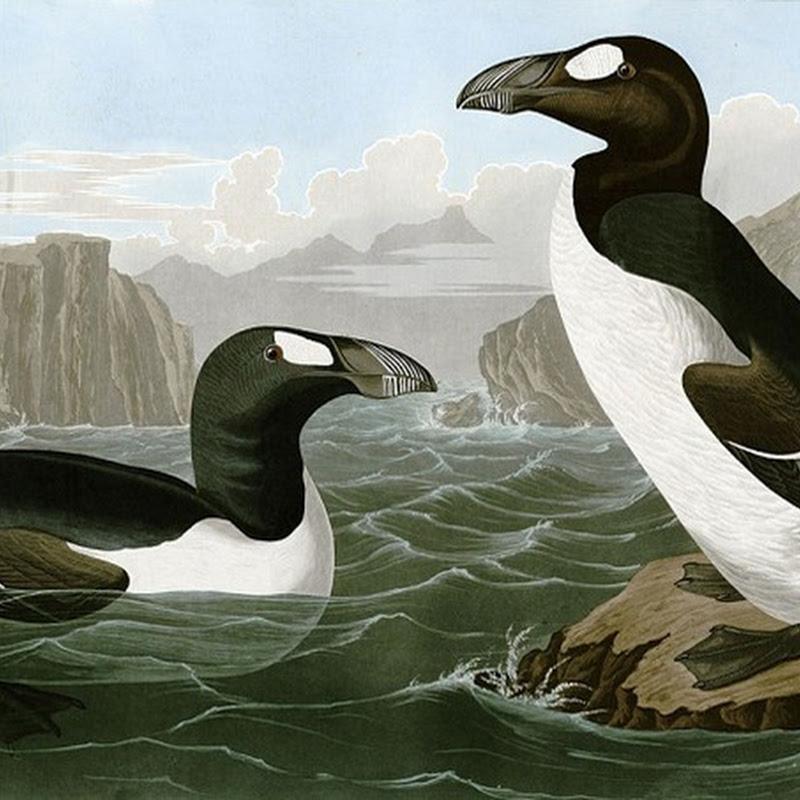 5 animais que foram caçados pelo homem até à extinção