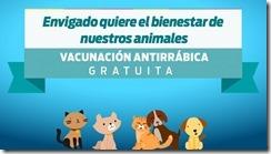 1280x720px-100-vacunación-antirrábica-678x381