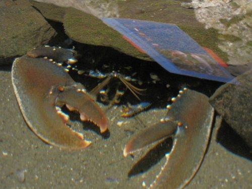 Bezoek aan het onderwatermuseum van het Arsenaal. Deze krab steekt zich alvast een beetje weg.