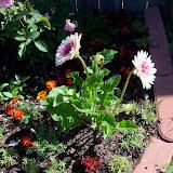 Gardening 2010 - 101_1254.JPG