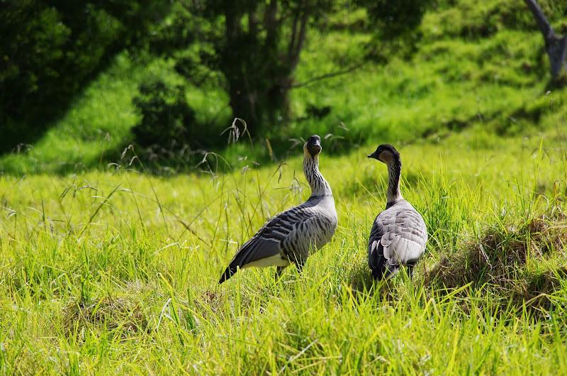 Hawaii 2013 - Best Story-Telling Photos - IMGP8040.JPG