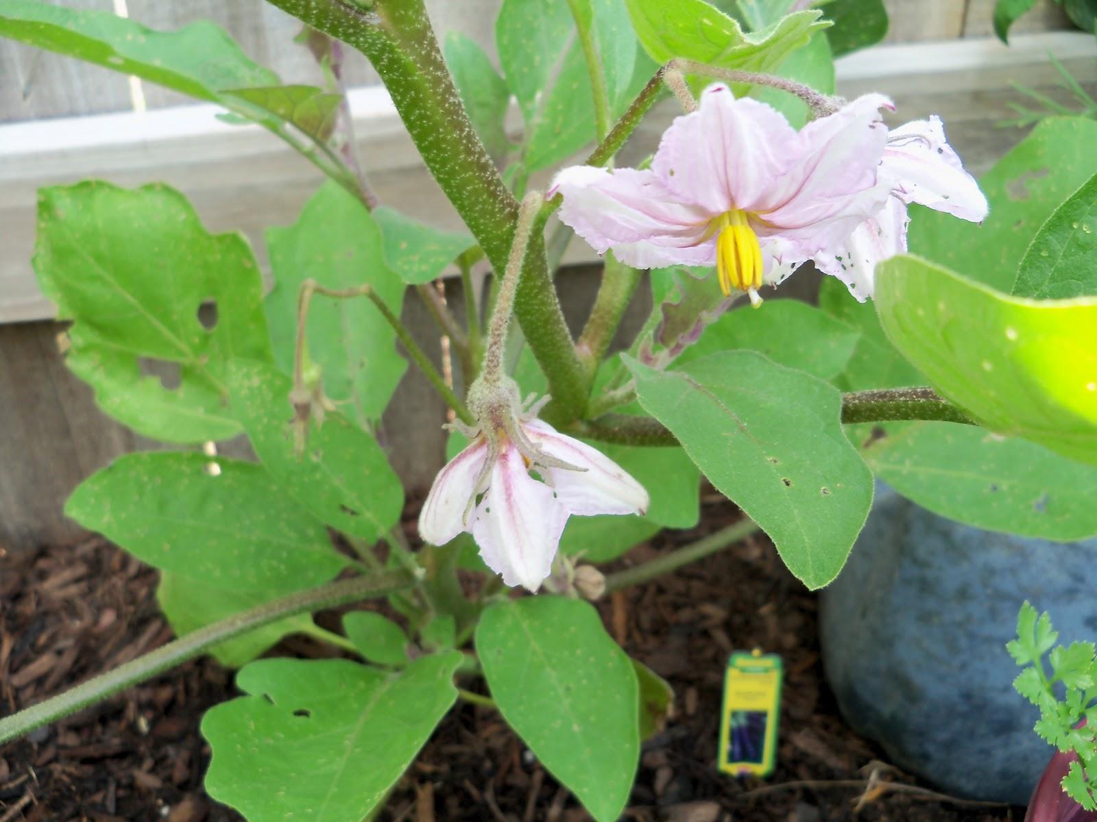 Gardening 2010, Part Two - 101_2722.JPG