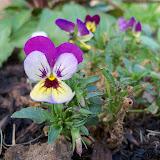 Gardening 2011 - 100_6866.JPG