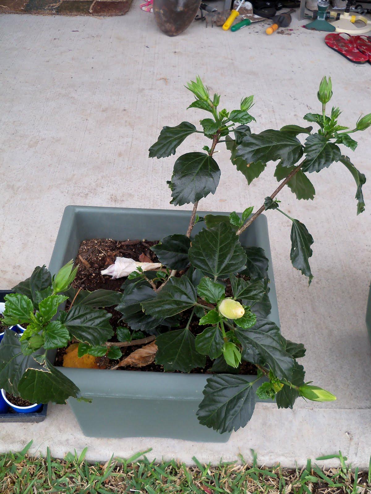 Gardening 2010 - 101_1131.JPG