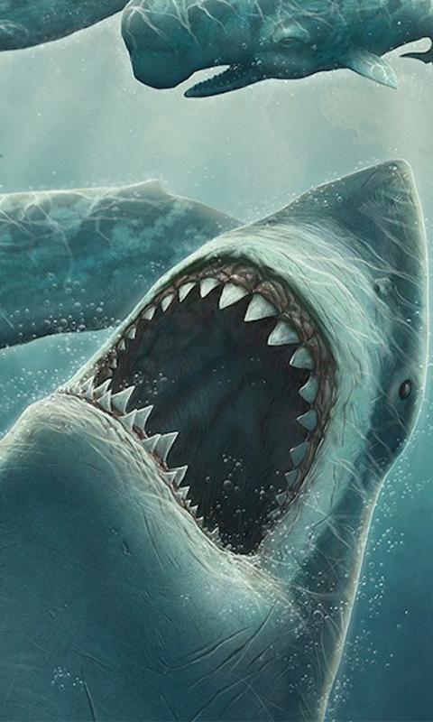 Sharks wallpaper android apps on google play sharks wallpaper screenshot voltagebd Images