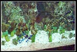 1997 - MACNA IX - Chicago - macna083.jpg