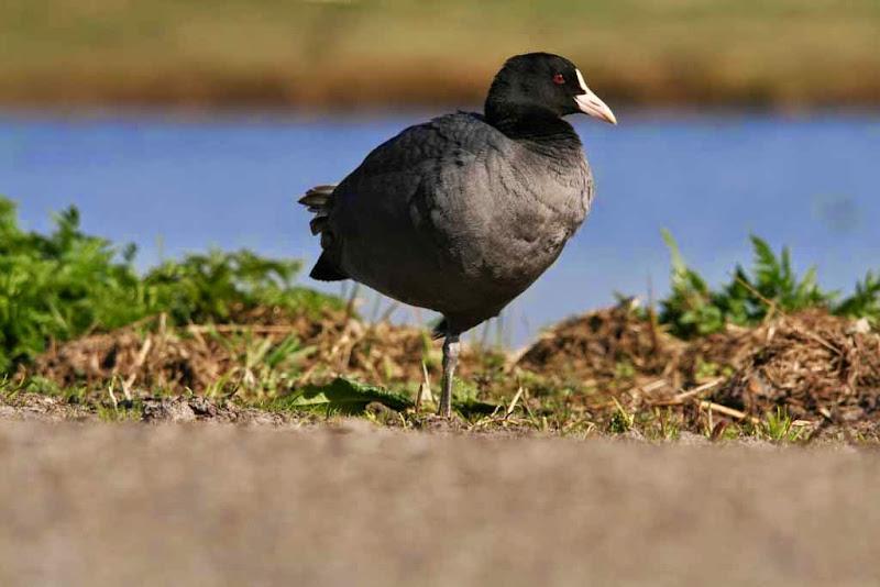 Vogels en dieren - IMG_6025.JPG