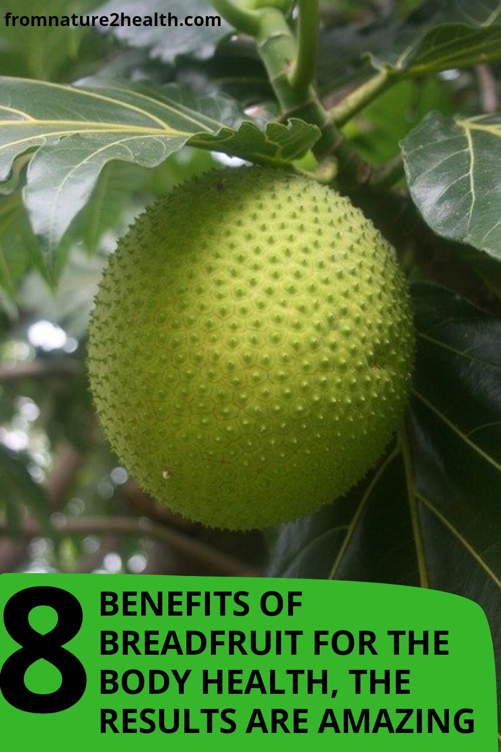 8 Benefits of Breadfruit for Bone, Cancer, Diabetes, Digestion, Hair, Heart Disease
