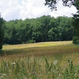 Hautes-Lisières (Rouvres, 28), 9 juillet 2012. Photo : J.-M. Gayman