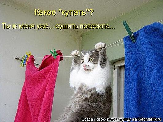 1429356231_kotomatrica