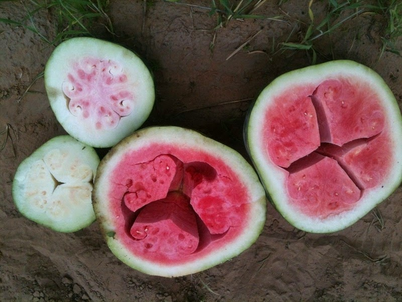 hollow-heart-watermelon-2