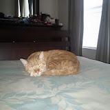 Kitteh - IMG_20120311_142613.jpg