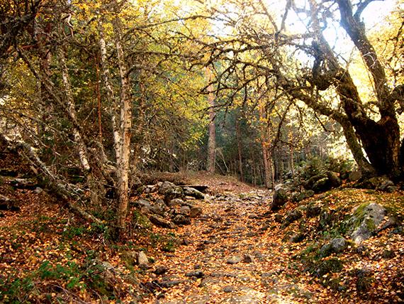 El otoño y la apatía. La disminución de la luz afecta al estado de ánimo