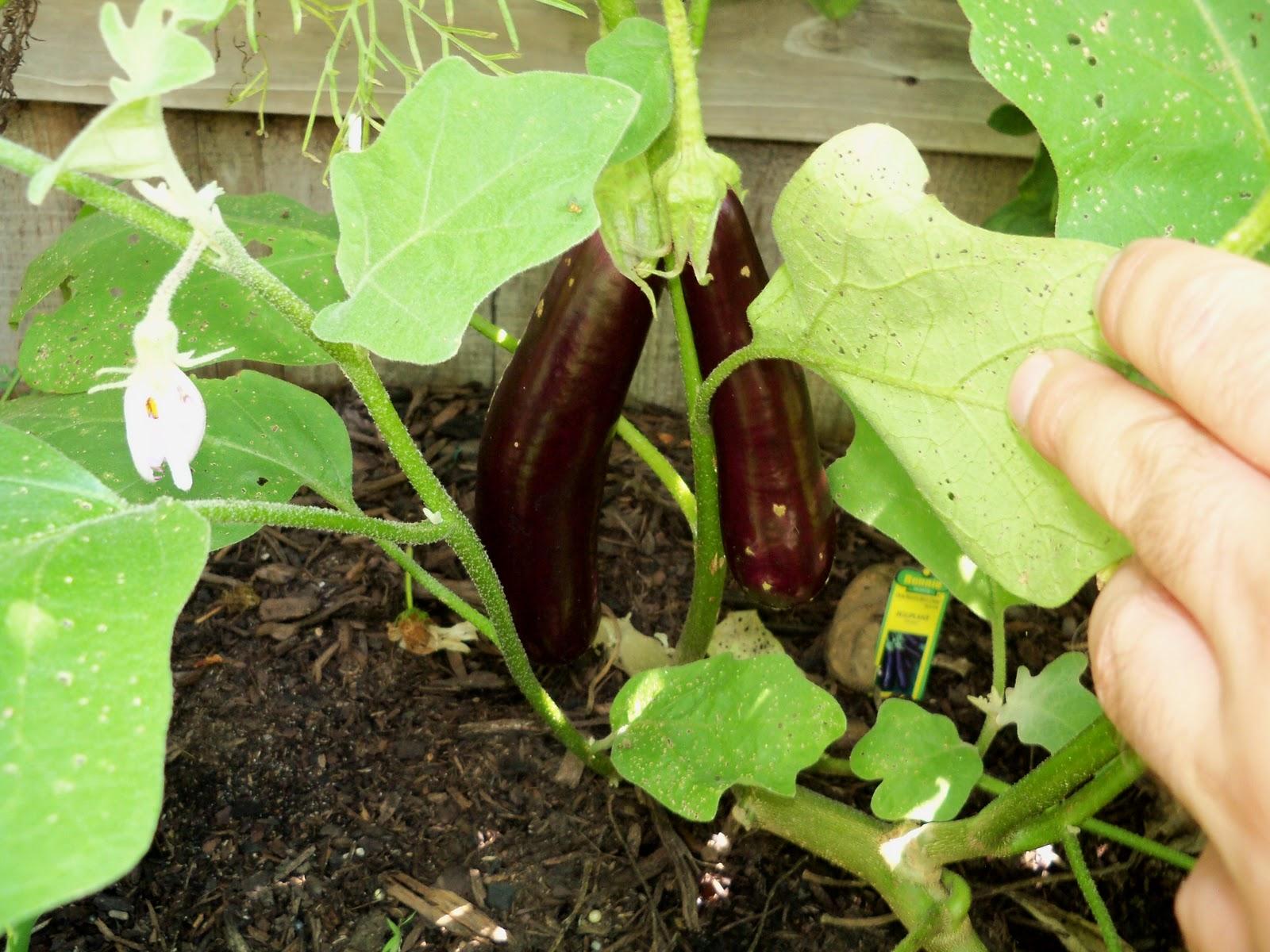 Gardening 2010, Part Three - 101_4432.JPG