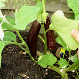 Gardening 2010, Part Three - 101_4432.JPG
