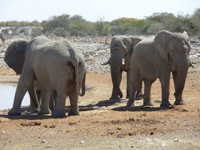 أفضل ما في أفريقيا  Best of Africa Namibia_180807120640