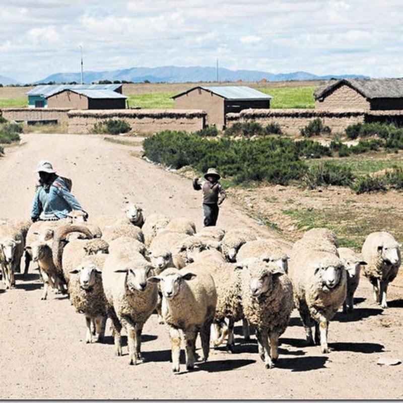 Collana: municipio paceño (Bolivia)