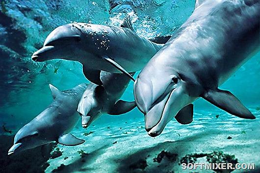 delfiny-chernogo-morya