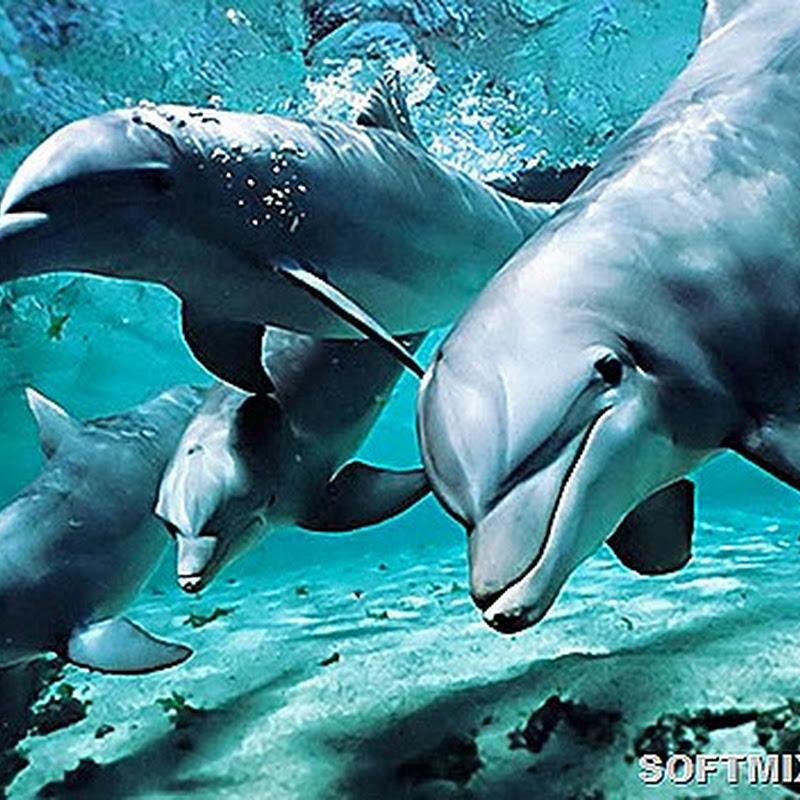 """Дельфины с """"темной"""" стороны"""