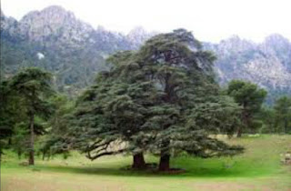 Forêt d'Ain Antar : Un paradis au pied de l'Ouarsenis