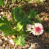 Gardening 2015 - 116_7657.JPG