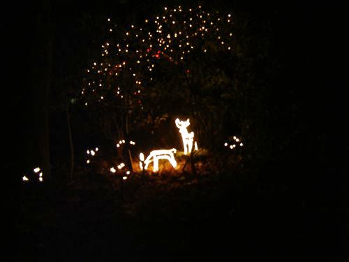 Christmas Lights 2005 - xmaslights2005072.jpg