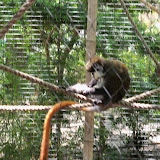 Houston Zoo - 116_8474.JPG