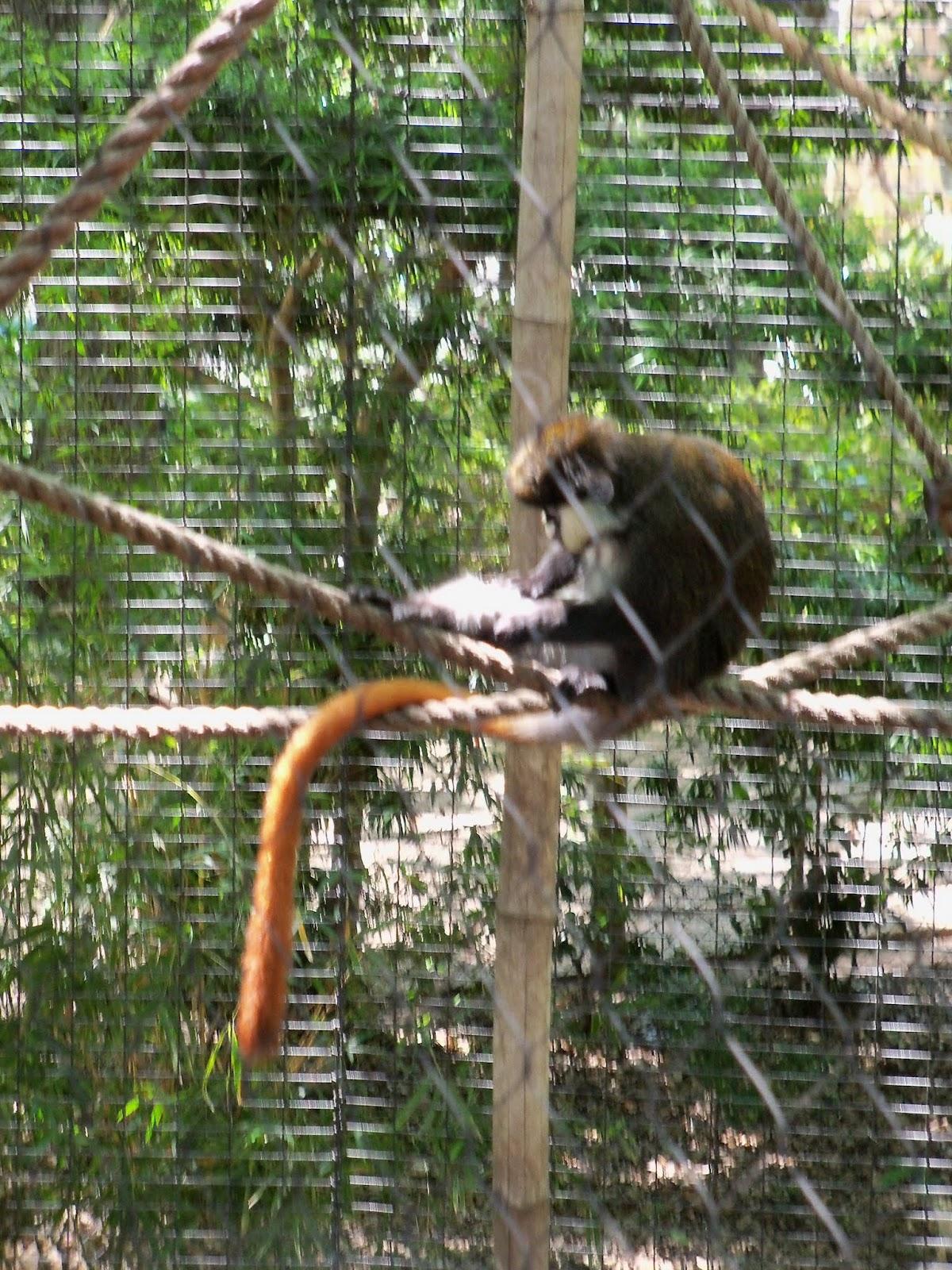 Houston Zoo - 116_8474.JPG