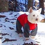 Charly im  Schneeanzug