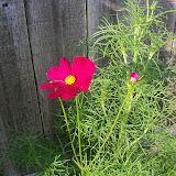 Gardening 2010, Part Two - 101_2868.JPG