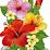Vanitha Rajesh's profile photo