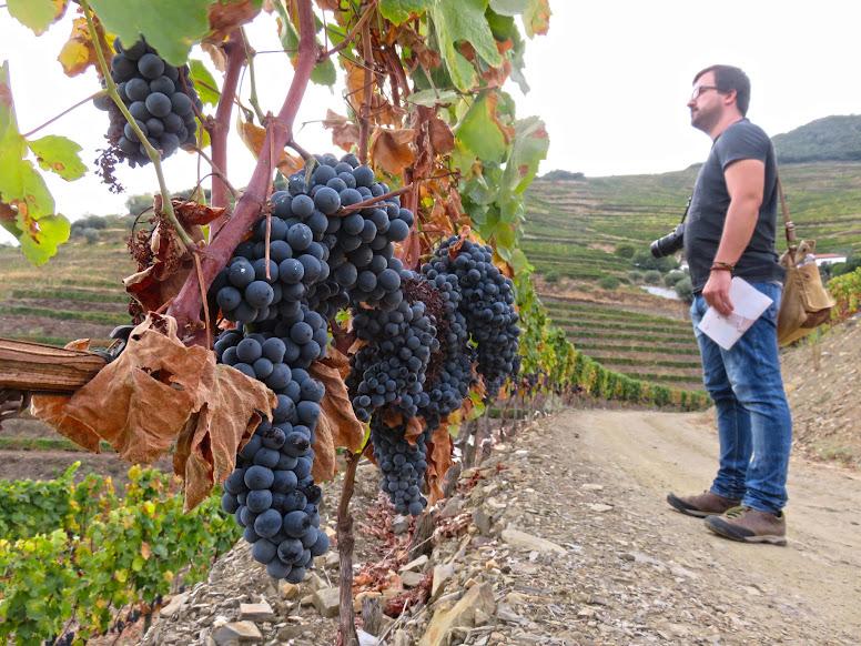 As melhores quintas do Douro (e que deve conhecer para provar o vinho do Porto) | Portugal