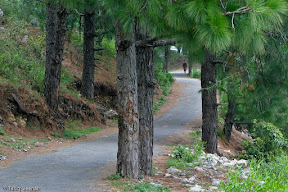 Beautiful road to Pir Suhawa, Islamabad